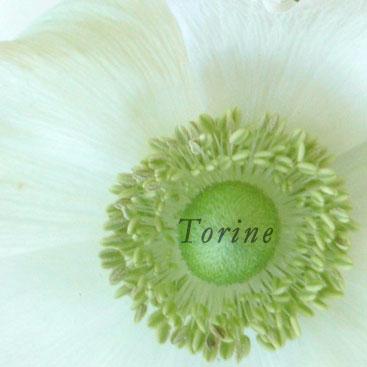 anemone-w.jpg